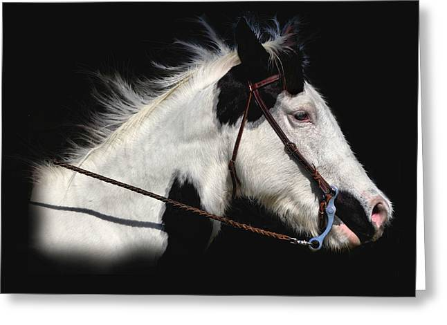 Horse Pictures Greeting Cards - Lacy The Movie Star Greeting Card by Linda Unger