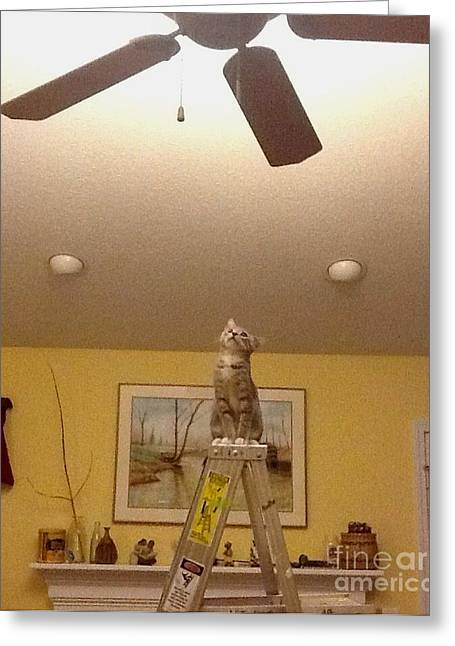 Stacy Bottoms Greeting Cards - Ladder Cat Greeting Card by Stacy C Bottoms