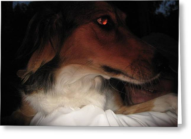 Collie Mixed Media Greeting Cards - Lady at dusk Greeting Card by Gabriela Mus