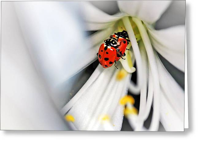 With Love Greeting Cards - Lady Beetles in Love Greeting Card by Kaye Menner