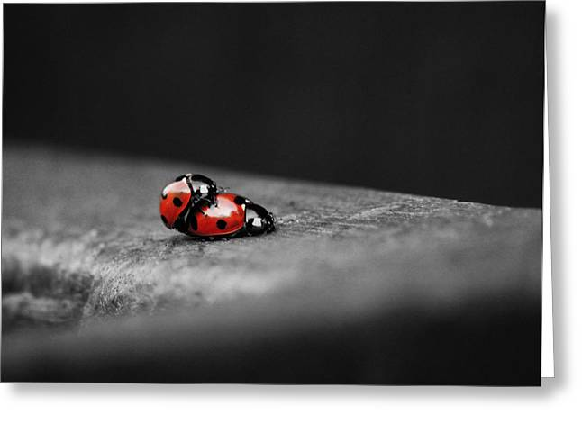 Lady Bird Loving Greeting Card by Martin Newman