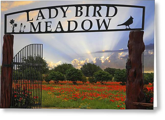 Wildseed Greeting Cards - Lady Bird Meadow - Fine Art by Lynn Bauer Greeting Card by Lynn Bauer
