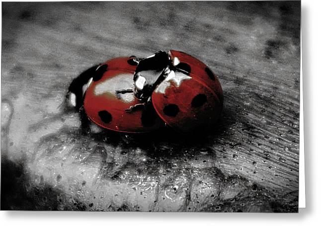 Silly Greeting Cards - Lady Bug Love Greeting Card by Martin Newman