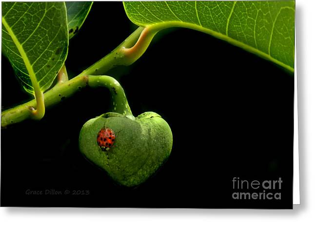 Annona Photographs Greeting Cards - Lady Bug on Pond Apple Greeting Card by Grace Dillon