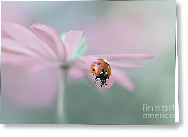 Close Focus Floral Greeting Cards - Lady in Pink Greeting Card by Jacky Parker