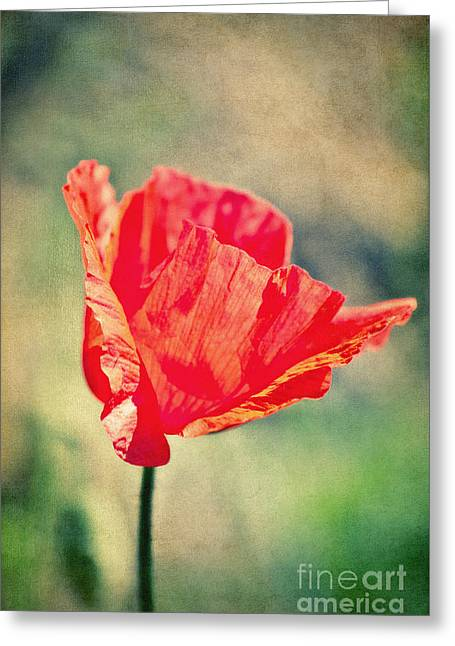 Flower Blooms Mixed Media Greeting Cards - Lady in red Greeting Card by Angela Doelling AD DESIGN Photo and PhotoArt