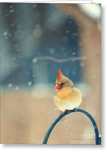 Cardinals In Snow Greeting Cards - Lady in Waiting Greeting Card by Kay Pickens