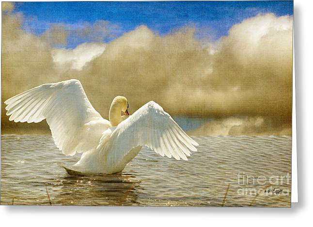Swans... Digital Art Greeting Cards - Lady-In-Waiting Greeting Card by Lois Bryan