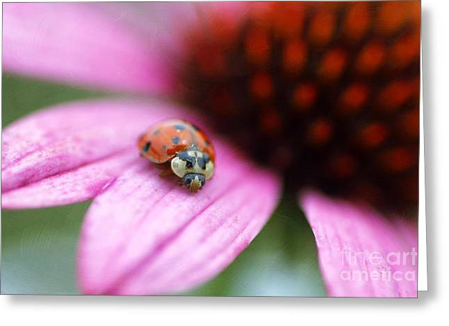 Lady Of Summer Greeting Card by Darren Fisher