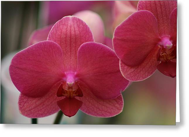 Close Up Floral Pyrography Greeting Cards - Lady Orchid Greeting Card by Valia Bradshaw