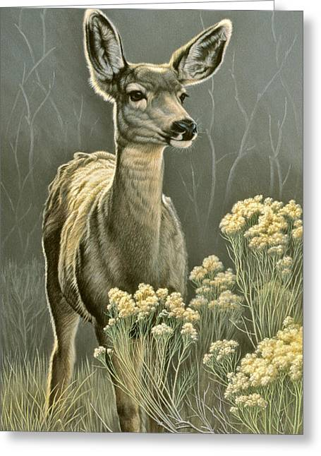 Doe Greeting Cards - Lady Greeting Card by Paul Krapf