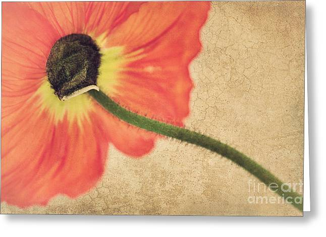 Perspective Mixed Media Greeting Cards - Lady Poppy Greeting Card by Angela Doelling AD DESIGN Photo and PhotoArt