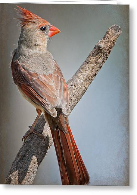 Female Northern Cardinal Greeting Cards - Lady Redbird Greeting Card by Bonnie Barry