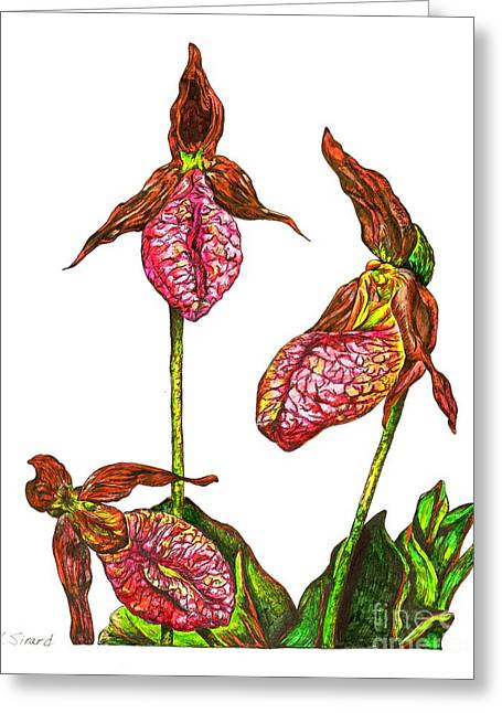 Green And Yellow Greeting Cards - Lady Slippers Greeting Card by Karen Sirard