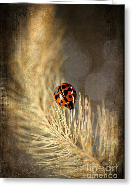 Little Critters Greeting Cards - Ladybird Greeting Card by Darren Fisher