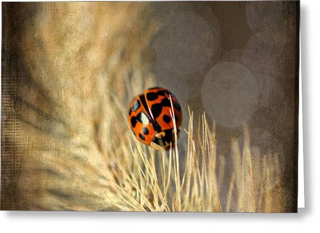 Ladybird Greeting Card by Darren Fisher