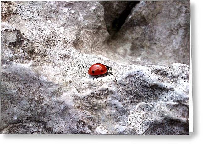 Lucy D Photographs Greeting Cards - Ladybird Greeting Card by Lucy D