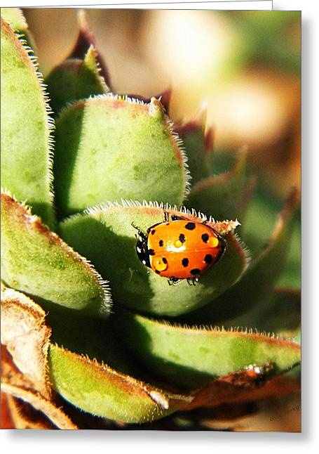 Orange And Brown Wings Greeting Cards - Ladybug and Chick Greeting Card by Chris Berry