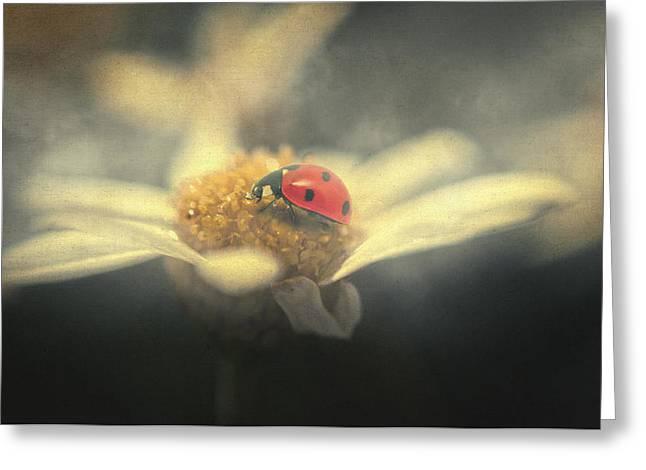Mystic Art Greeting Cards - Ladybug dream Greeting Card by Taylan Soyturk