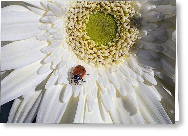Ladybug Greeting Card by Garry Gay