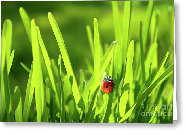 Warm Summer Greeting Cards - Ladybug in Grass Greeting Card by Carlos Caetano