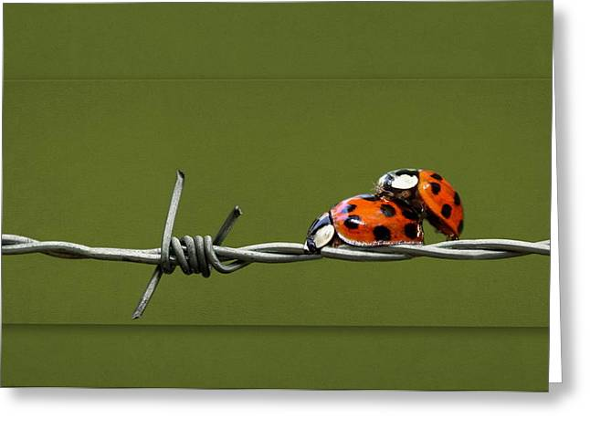 Canvas Framing Greeting Cards - Ladybug in love Greeting Card by Heike Hultsch
