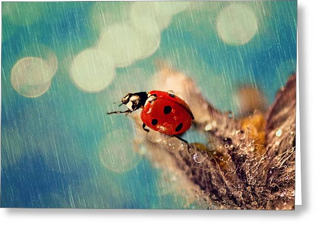Raining Greeting Cards - Ladybug in the rain Greeting Card by Evgeni Ivanov