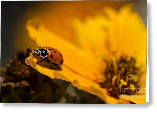 Ladybug Greeting Card by Nicole Markmann Nelson