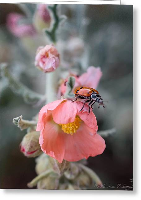 Sphaeralcea Greeting Cards - Ladybug on a Globemallow Greeting Card by Aaron Burrows