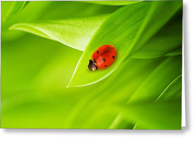 Ladybug on leaves Greeting Card by Boon Mee