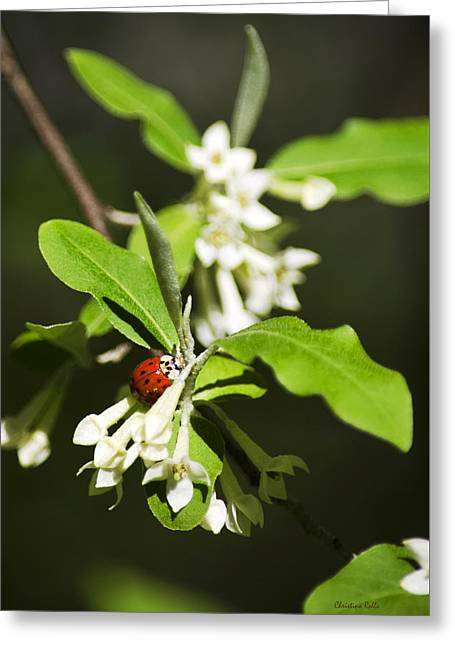 Ladybug And Flowers Greeting Card by Christina Rollo
