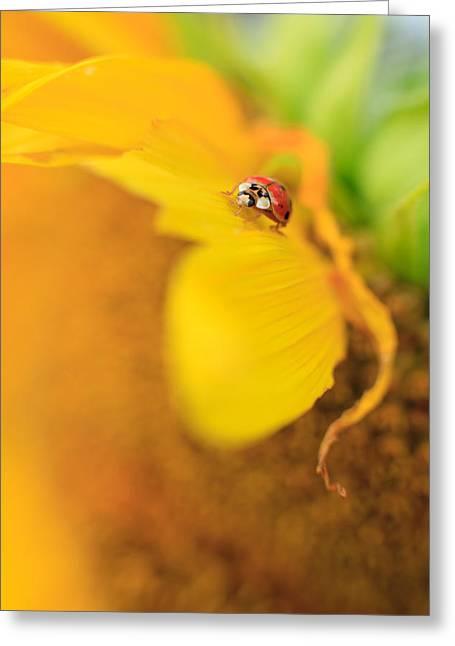 Ladybug Greeting Card by Rebecca Skinner