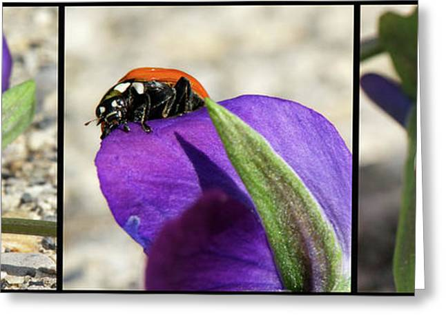 Decorate Greeting Cards - Ladybug Triptych Greeting Card by Lisa Knechtel