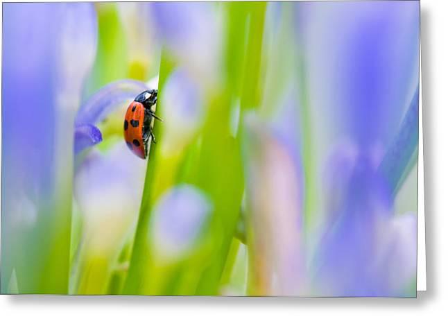 Ladybug Greeting Card by Ulrich Schade