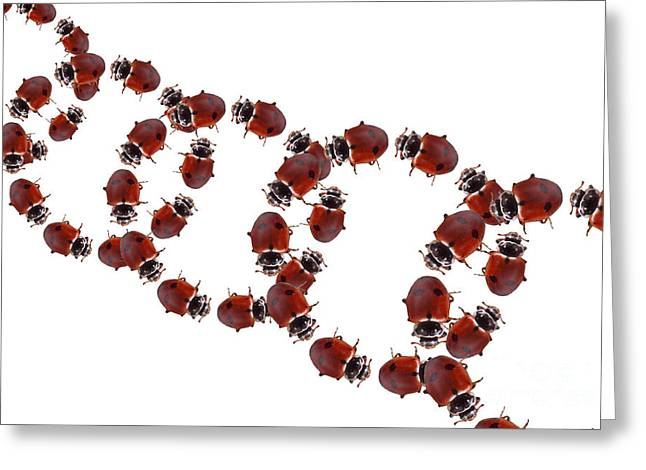 Abstract Shapes Greeting Cards - Ladybugs, Illustration Greeting Card by Sigrid Gombert