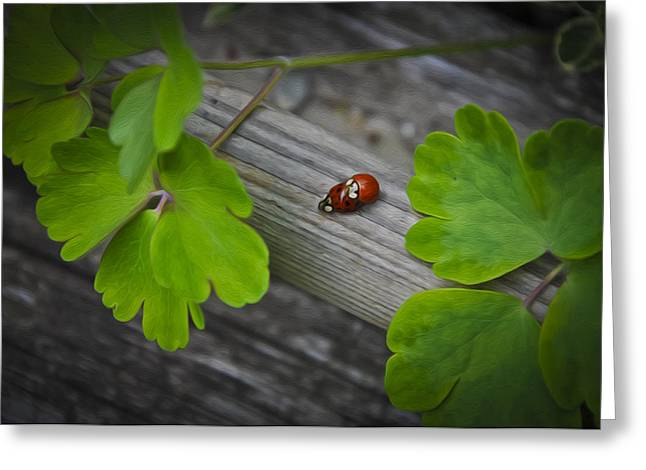 Cute Digital Art Greeting Cards - Ladybugs Mating Greeting Card by Aged Pixel
