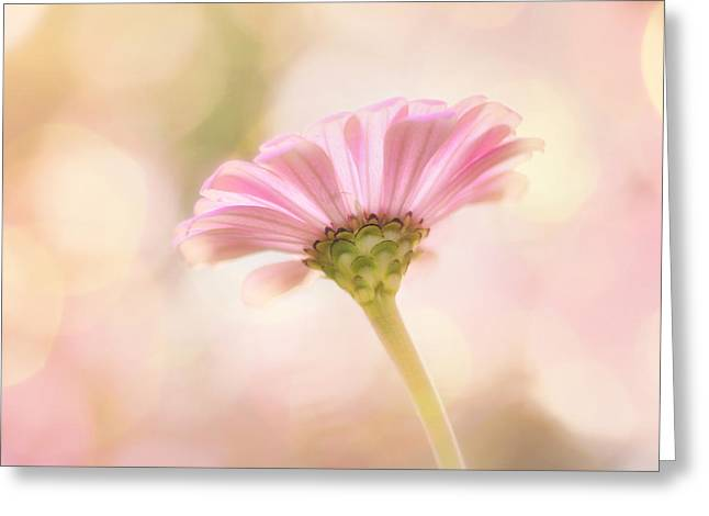 Ladylike Greeting Card by Amy Tyler