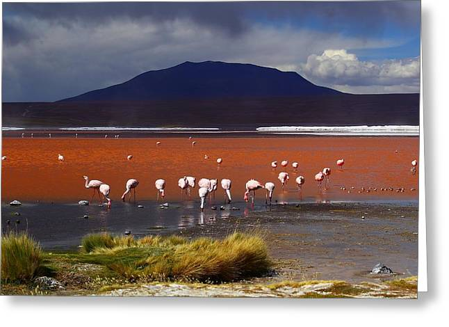 Bolivia Greeting Cards - Laguna Colorada Greeting Card by FireFlux Studios
