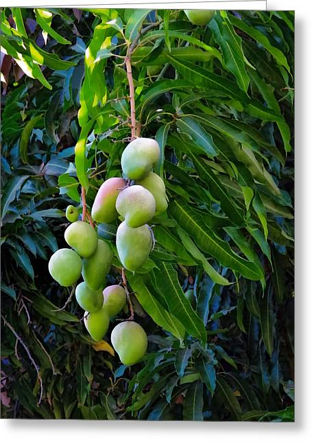 Mango Greeting Cards - Lahaina Mango 1 Greeting Card by Dawn Eshelman