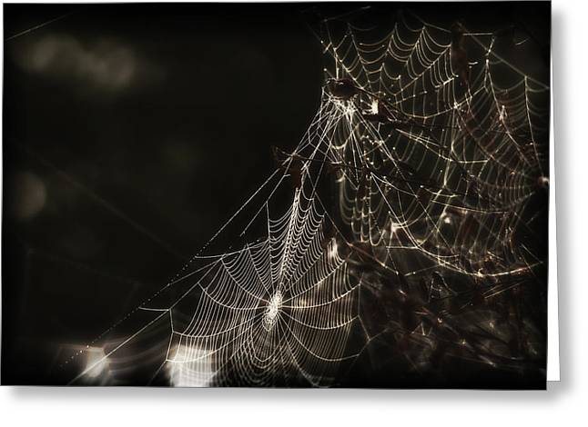 Spun Web Greeting Cards - Lair of the Spider Greeting Card by Mountain Dreams