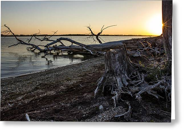Tree Stump Greeting Cards - Lake Alice Sunset Greeting Card by Aaron J Groen