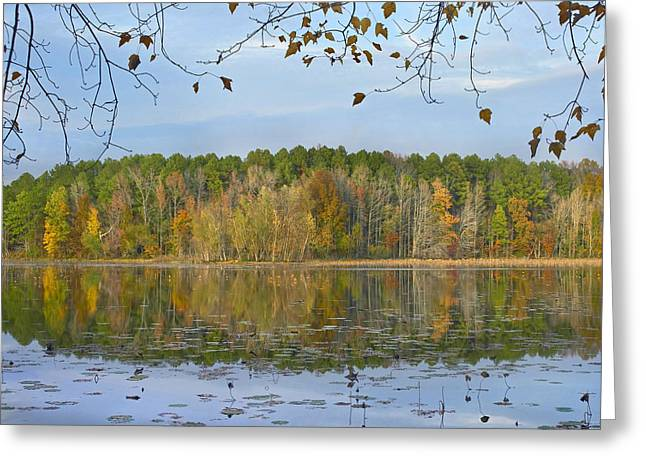 Arkansas Greeting Cards - Lake Bailey Petit Jean State Park Greeting Card by Tim Fitzharris