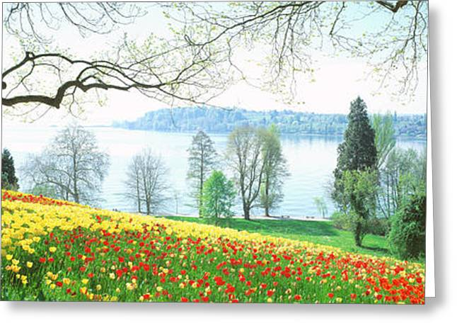 Lake Constance Greeting Cards - Lake Constance, Insel Mainau, Germany Greeting Card by Panoramic Images