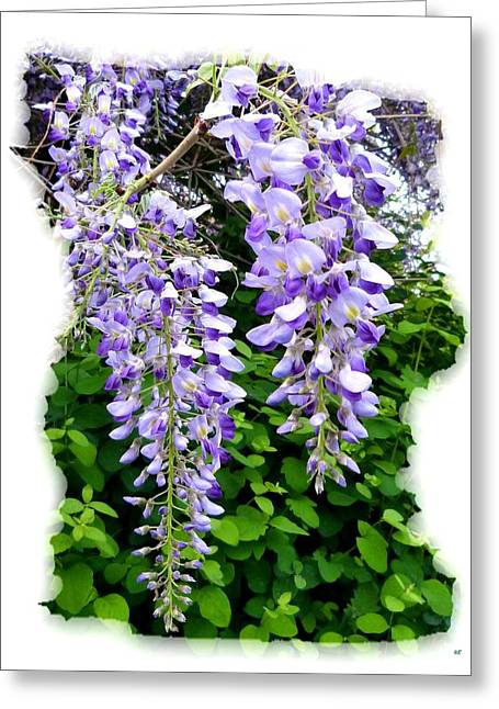 Okanagan Valley Greeting Cards - Lake Country Wisteria Greeting Card by Will Borden