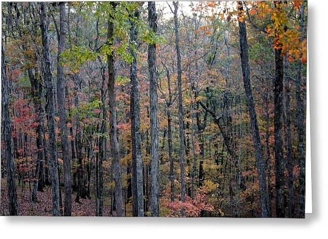 Lake Tapestries - Textiles Greeting Cards - Lake Cumberland State Resort Park in in Autumn - Kentucky Greeting Card by Thia Stover