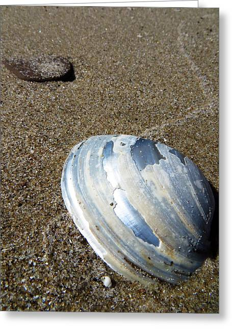 Invertebrates Greeting Cards - Lake Erie Mussel Shell Greeting Card by Shawna  Rowe