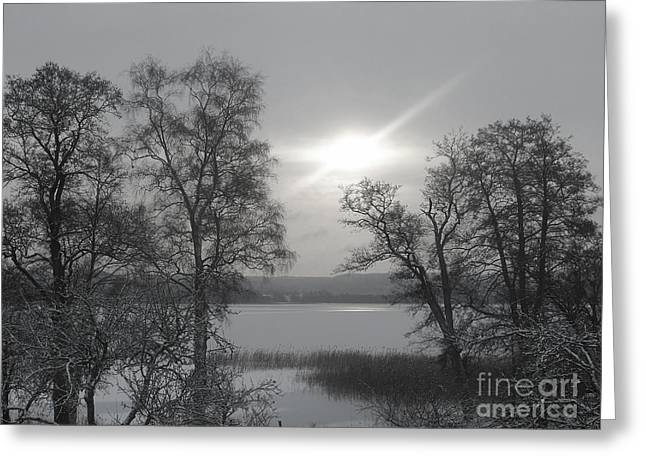 Snow And Trees Greeting Cards - Lake in Winter Greeting Card by Lutz Baar