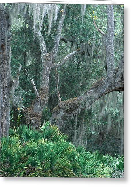 Epiphytic Greeting Cards - Lake Kissimmee State Park Greeting Card by Mark Newman
