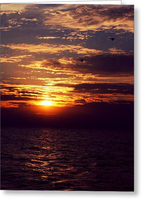 Beach Sand Birds Flying Clouds Sun Sky Trees Grass Building Day Beautiful Wings Flock Greeting Cards - Lake Michigan Sunset Greeting Card by Paul Szakacs