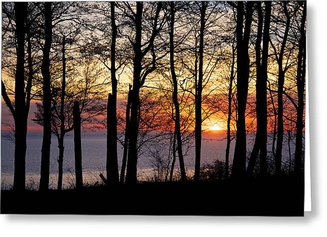 Dereske Greeting Cards - Lake Michigan Sunset with Silhouetted Trees Greeting Card by Mary Lee Dereske